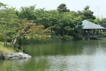 ゆり園の池です。