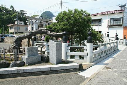 八幡神社の迎神の松です。