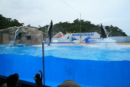 イルカのジャンプ-1
