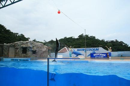 イルカのジャンプ-2