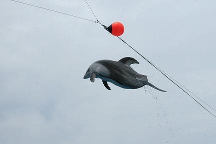 イルカのジャンプ-3