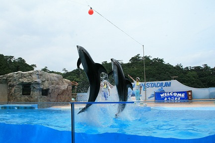 イルカのジャンプ-4