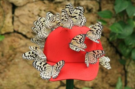 蝶は赤いものが好き