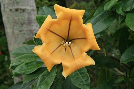 南国の花です。