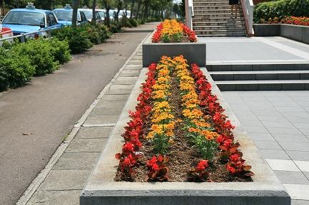 通路の花壇です。