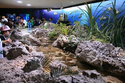 水族館-1