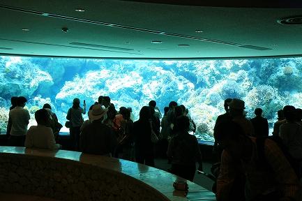 水族館-3