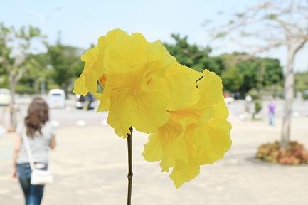 黄色い花です。