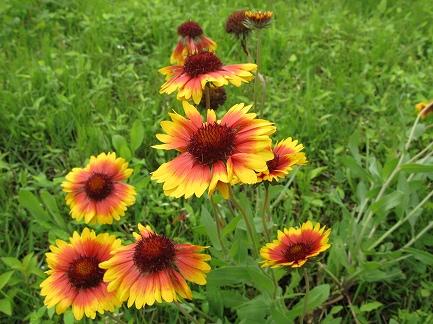 色がきれいな花