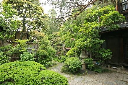 新緑がきれいな庭