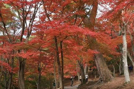 虹の郷・紅葉-3