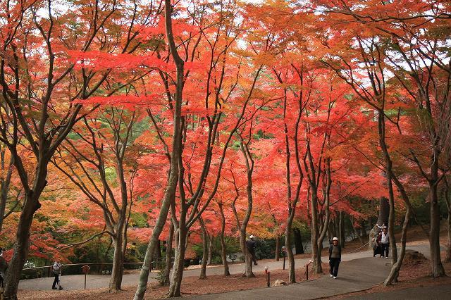 虹の郷・紅葉-1