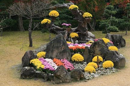 虹の郷・菊の飾り