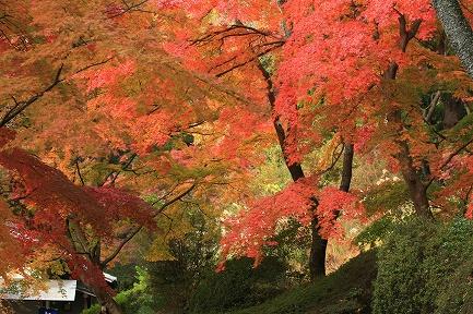 虹の郷・紅葉-4