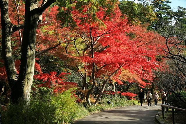 熱海梅園・紅葉-1