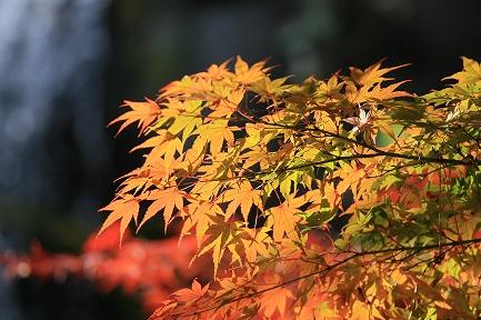 熱海梅園・紅葉-4