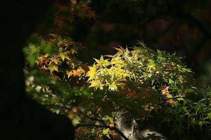 熱海梅園・紅葉-5