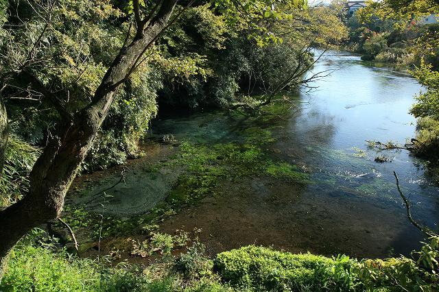 柿田川湧水-1