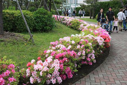 横浜・八景島シーパラダイス-5