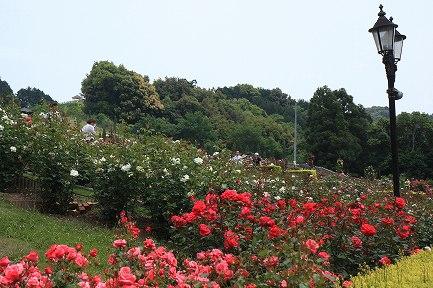 ばらの丘公園-4