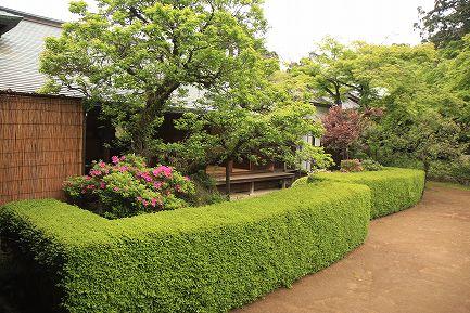 喜多院・庭園-6
