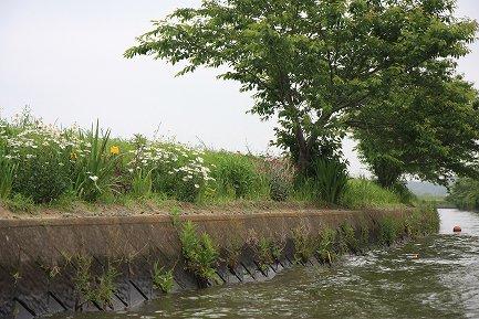 加藤洲十二橋めぐり-5