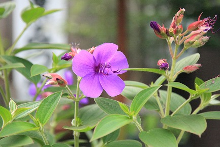 きれいな花-1