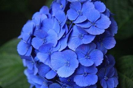 きれいな花-2