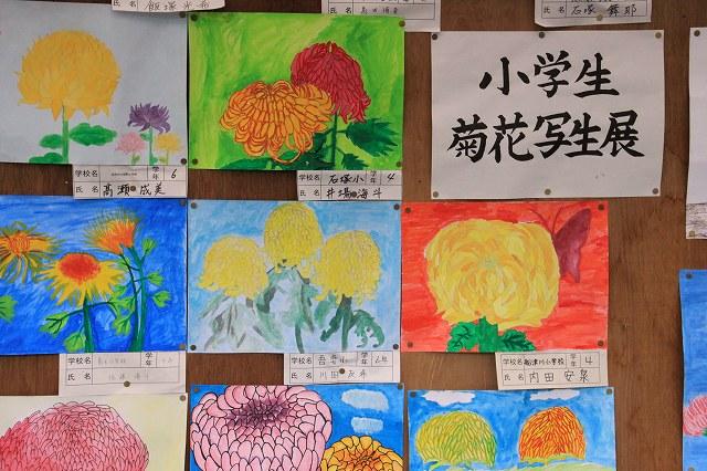 菊花展-8