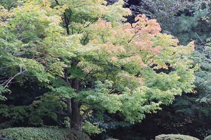 泉山の紅葉-2