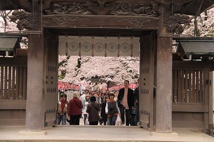 三島大社の桜-7