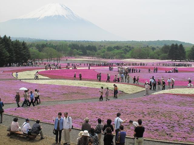 富士芝桜まつり-2