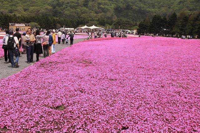 富士芝桜まつり-9