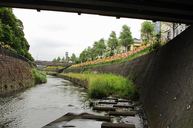 逆川のユリ-14