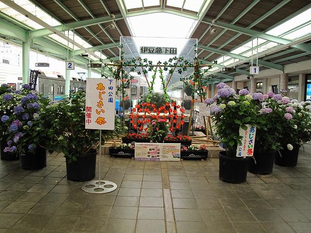 下田あじさい園-15