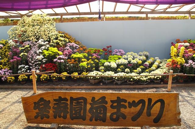 楽寿園菊まつり-9