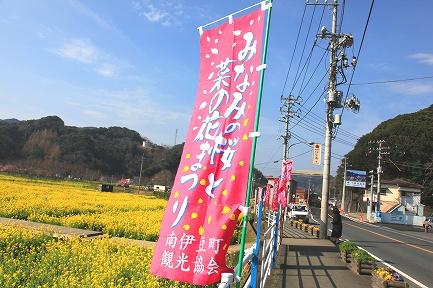 みなみの桜と菜の花まつり-2