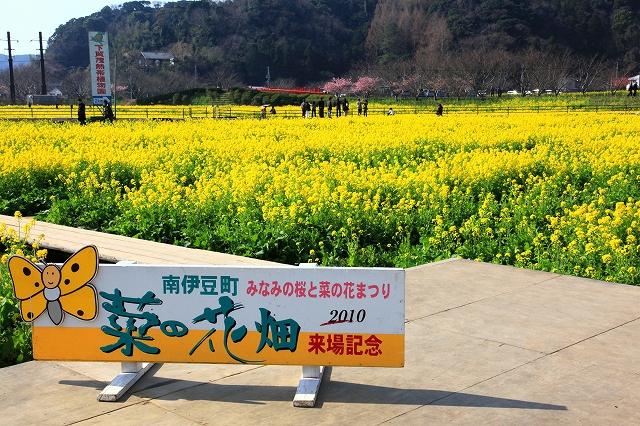 みなみの桜と菜の花まつり-4