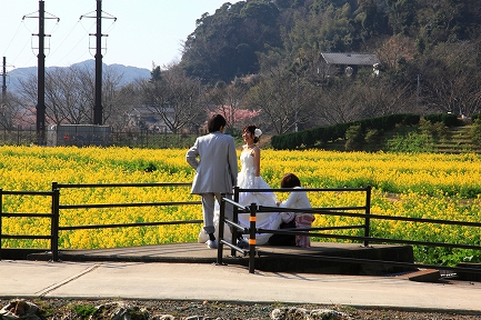 みなみの桜と菜の花まつり-8
