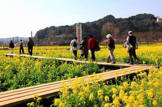 みなみの桜と菜の花まつり-11