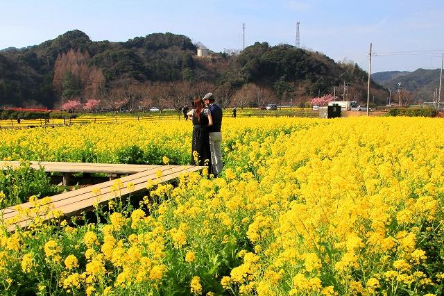 みなみの桜と菜の花まつり-10