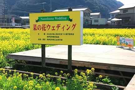 みなみの桜と菜の花まつり-6