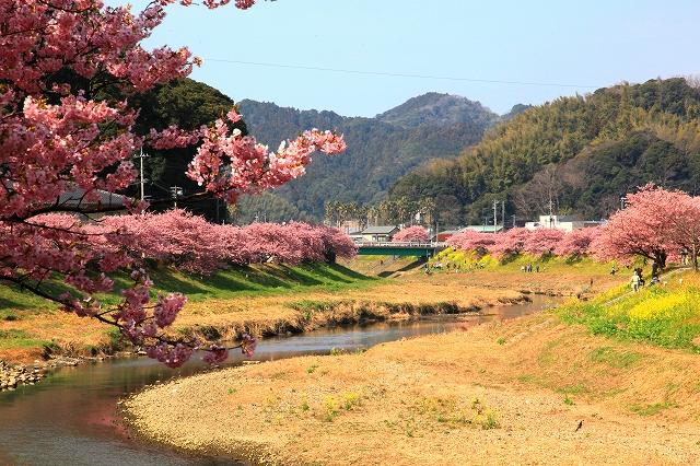 みなみの桜-9