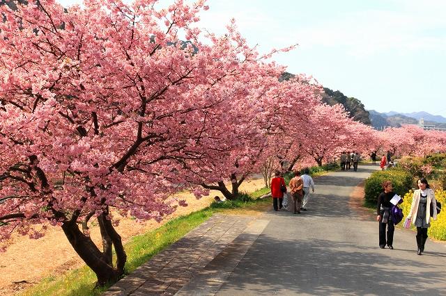 みなみの桜-12