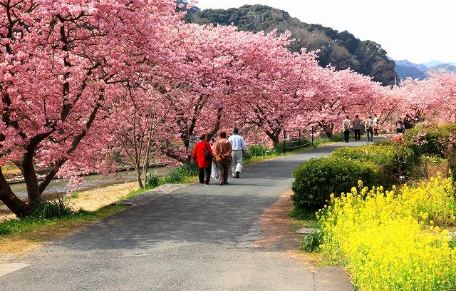 みなみの桜-13