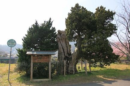 加畑賀茂神社-2