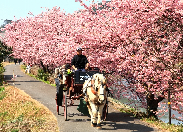 みなみの桜-3