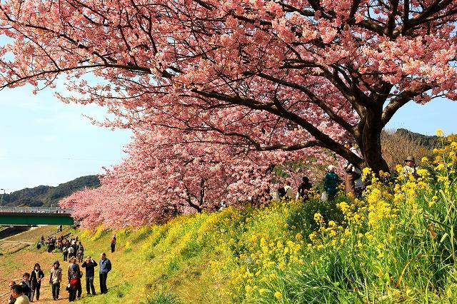みなみの桜-10