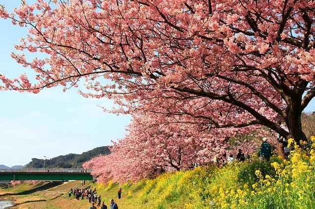 みなみの桜-11