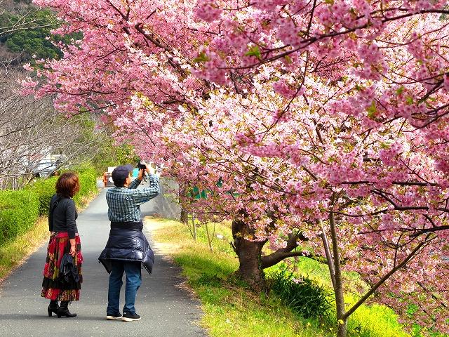 みなみの桜-7